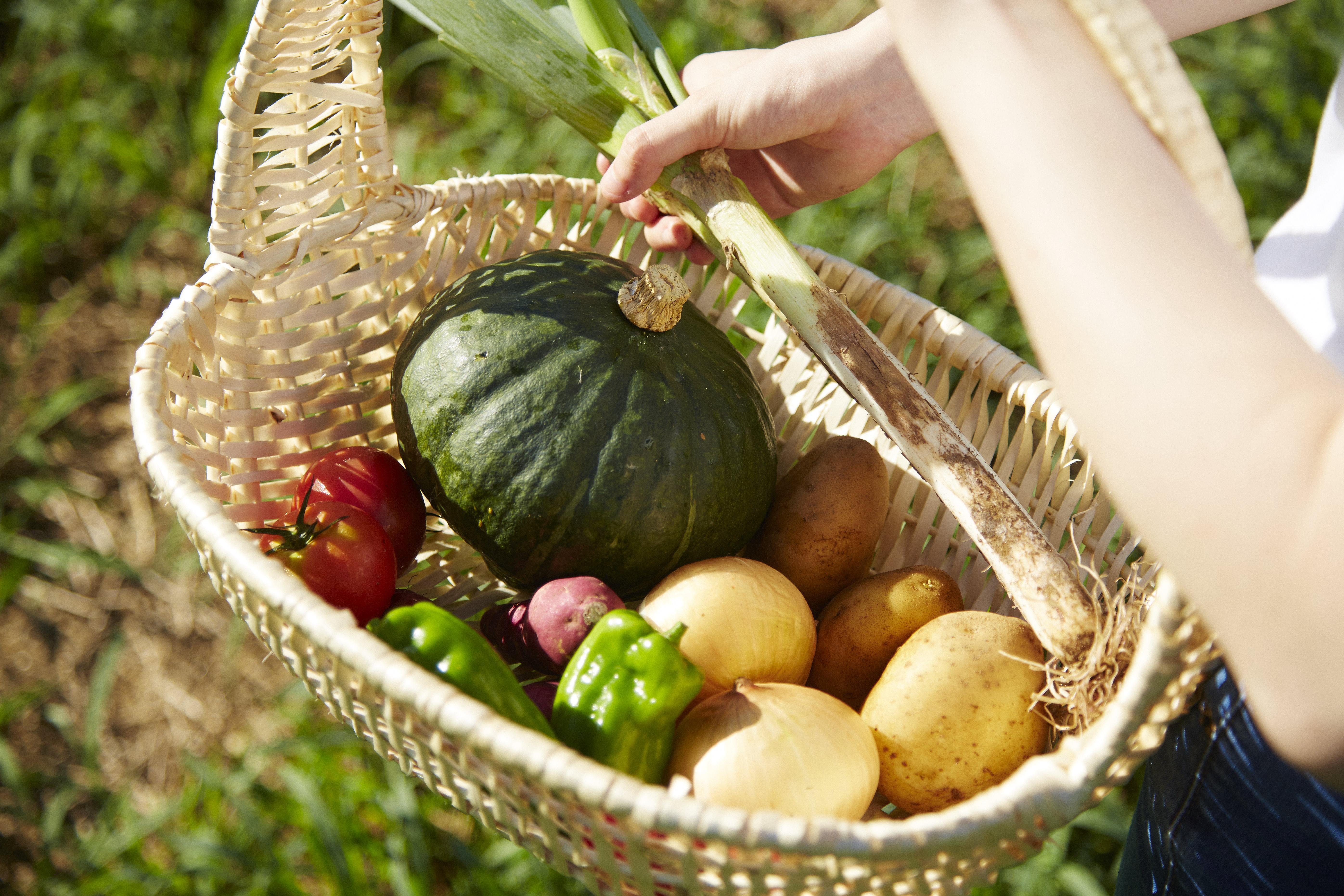 千葉ウシノヒロバ 取り扱う地元野菜のイメージ※実際の販売商品とは異なります